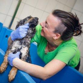 misshandelter hund adoptieren
