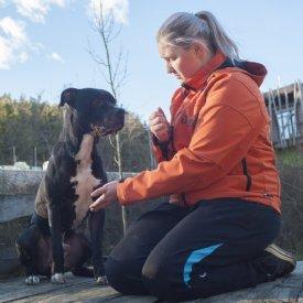 Hunde Abzugeben Hundewelpen Tierheim Osterreich Hund Aus Pflegestelle Adoptieren