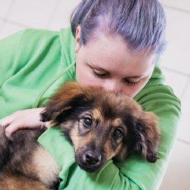 Bestattung Hund Katzen Kaufen Junge Hunde In Not