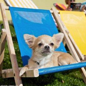Katzen Welpen Tierheim Tiere In Not Osterreich Hundebetreuung Gesucht